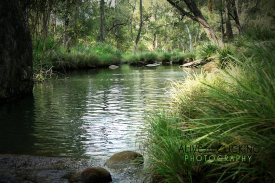 Mt Barney Lodge Country Retreat: mt. barney watering hole