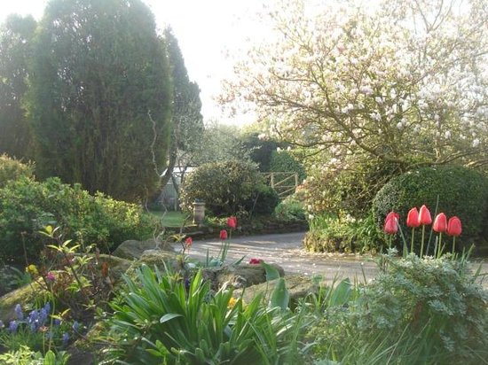 Tansley, UK: The garden in spring