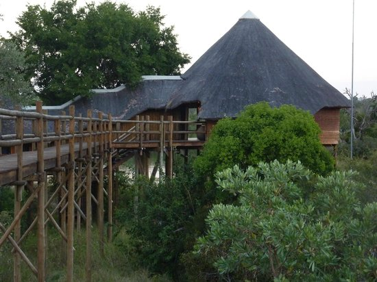 Ulusaba Private Game Reserve, South Africa: Treehouse suite