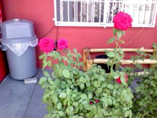 Sandia Peak Inn Motel: Kay's roses outside the motel