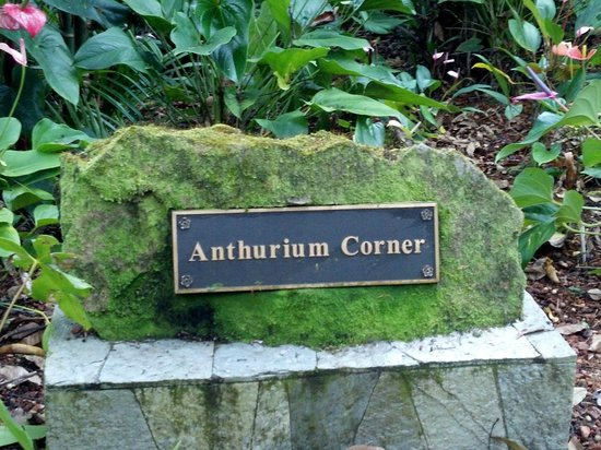 Papaikou, HI: Love the antherium corner