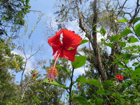 Punta Gorda, Belize: Beautiful flowers abound