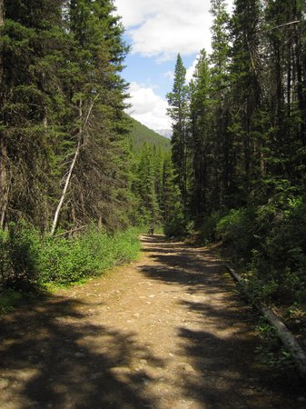 Shadow Lake Lodge: Road into Shadow Lake