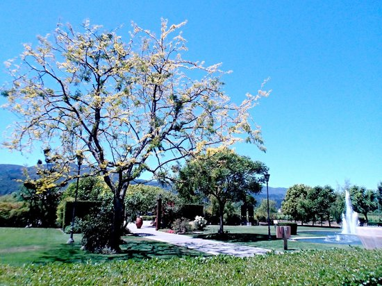 Rutherford, CA: Lovely grounds, with lots of sculptures around.