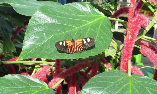 Ames, IA: Butterfly House