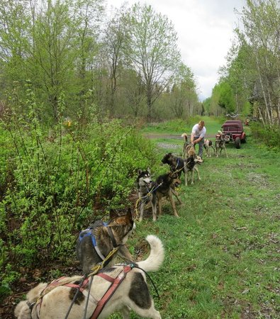 Jefferson, Nueva Hampshire: It was quite a wonderful experience to see the work involved with hitching all the dogs!
