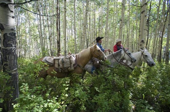 The Osprey at Beaver Creek, A RockResort : Horseback Riding
