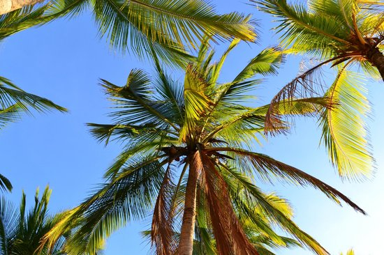 Hotel Samara Inn: Beautiful Palms At Playa Samara