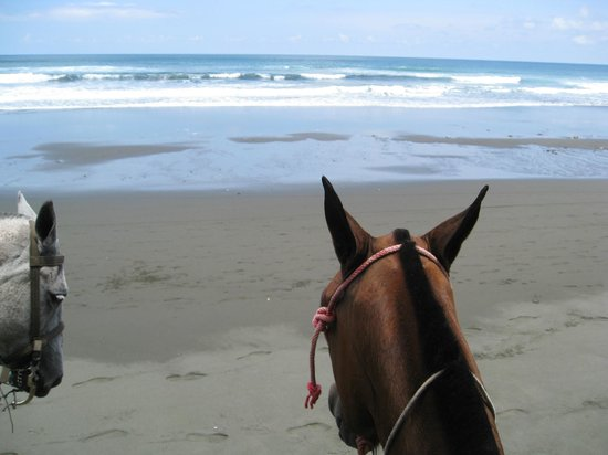 Pavones, Kosta Rika: Riding on the beach- the view from on the horse