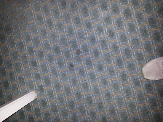 Mountain View, Californie : the whole carpet was staying did not want to walk on it