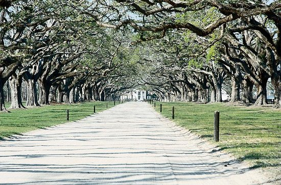 Crowne Plaza Charleston Airport : Avenue of Oaks Boone Hall Plantation