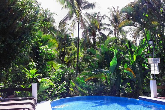 Falls Resort at Manuel Antonio: The gardens and pool
