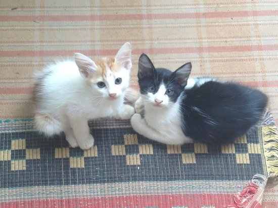 Kannur Beach House: These kittens made their home outside my room -very cute