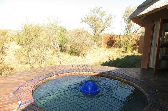 Madikwe Safari Lodge: My private pool!