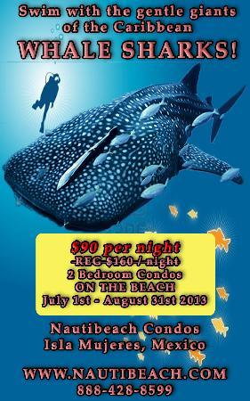Nautibeach Condos: Whale shark Special june-august