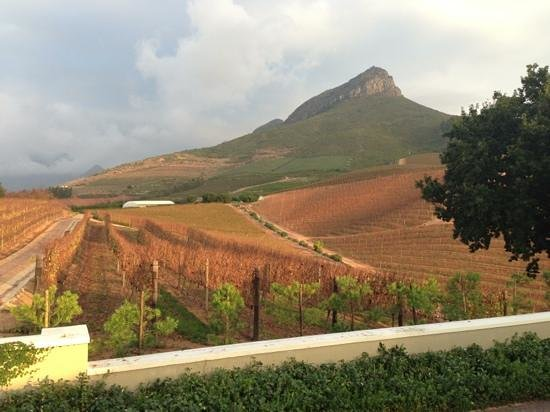 Delaire Graff Estate - Lodges and Spa: vineyards