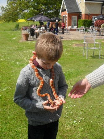 Ashford, UK: Corn snake