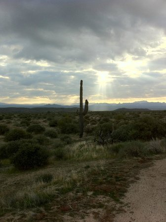 Fountain Hills, AZ : McDowell Mountain Regional Park 2
