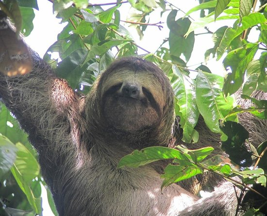 Manuel Antonio National Park, Costa Rica: Sloths!