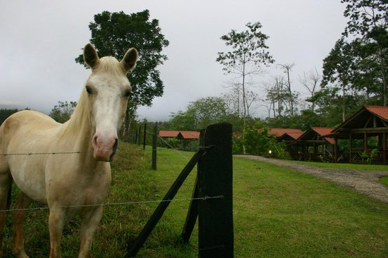 La Anita Rainforest Ranch: Thunder, the horse, was always there to greet us
