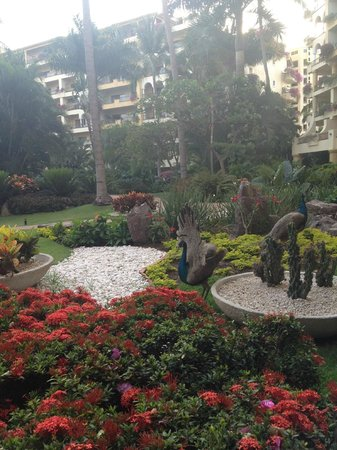 Velas Vallarta: GROUNDS