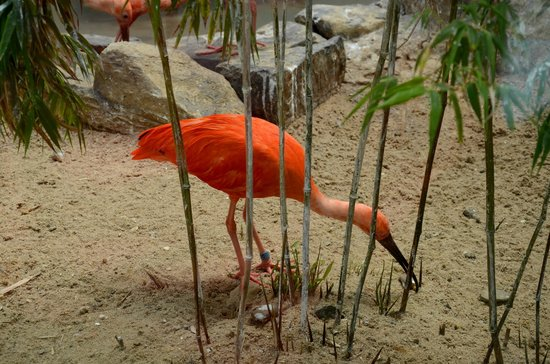 West Orange, NJ: Scarlet Ibis