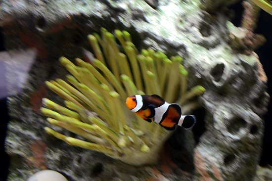 West Orange, NJ: Clown Fish