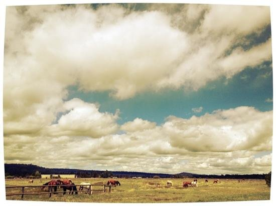 Sunriver, Oregón: Nearby horse herd on hole three.