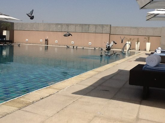 Svelte Hotel and Personal Suites: More and more pigeons, every 2 minutes