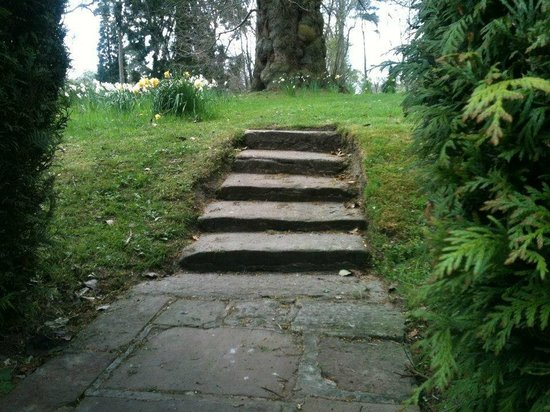 Cheshire, UK: Steps up through the hedge...