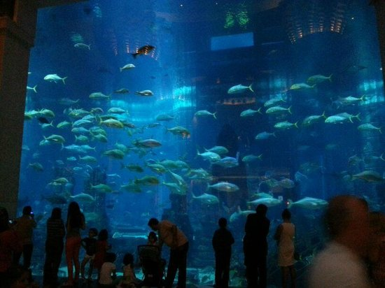 Atlantis, The Palm: acquario per le immersioni ,vetrata inerna