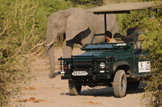Ngoma Safari Lodge: Elephant Encounter