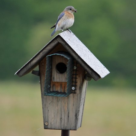 Woodbridge, VA: Bluebird box at the refuge