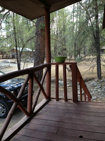Whispering Pine Cabins: Deer coming up while we're rocking on the porch