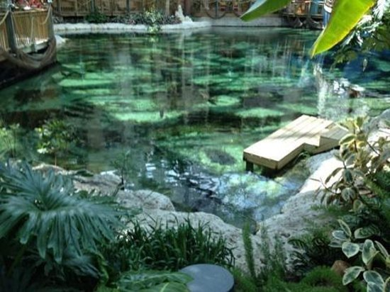 Gaylord Palms Resort & Convention Center: Pond