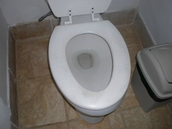Palmetto Bay Plantation: Orchid - Filthy Toilet Seat