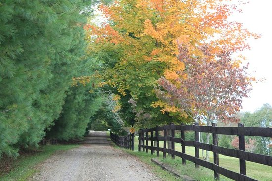 Mountain Song Inn Bed and Breakfast: Fall driveway