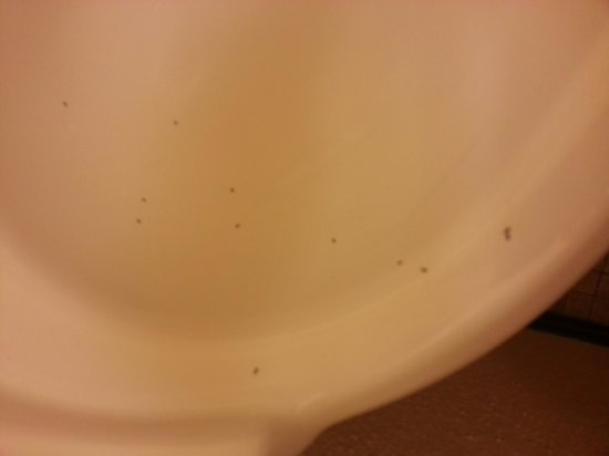 Seaside Hawaiian Hostel: ants in sink #1