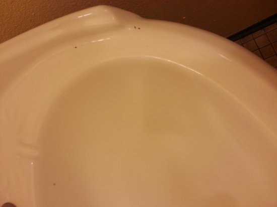 Seaside Hawaiian Hostel: ants in sink #2