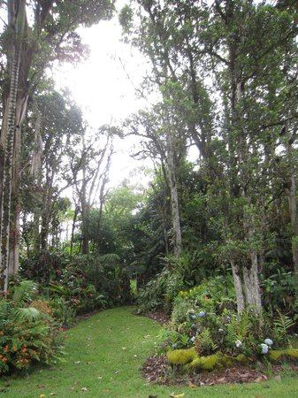 Pahoa, HI: Garden at Coconut Cottage