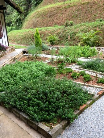 The Lakehouse, Cameron Highlands: Herb garden outside our room