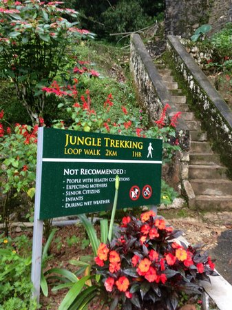 The Lakehouse, Cameron Highlands: Jungle trekking behind the hotel