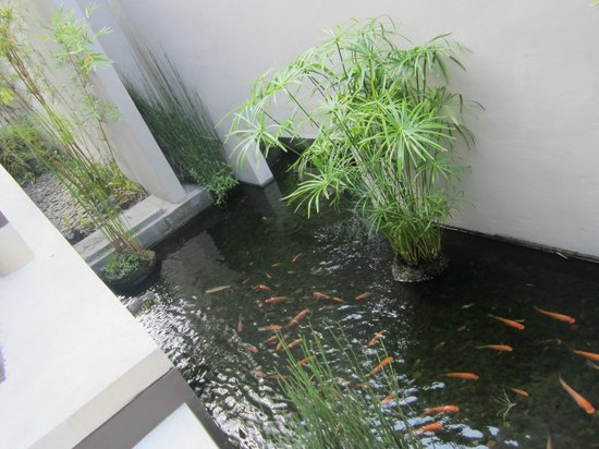 Tegal Sari: fish pool