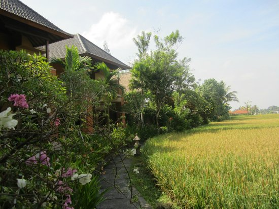 Tegal Sari: paddy terrace