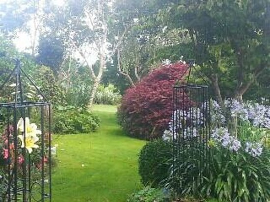 Otorohanga, New Zealand: Garden view from Kamahi Cottage