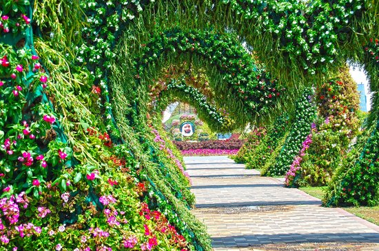 Miracle garden picture of miracle garden dubai for Au jardin des colibris tripadvisor