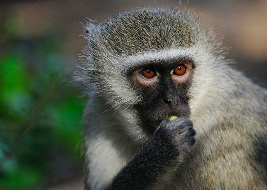 Bushwise Safaris: Monkeys!!