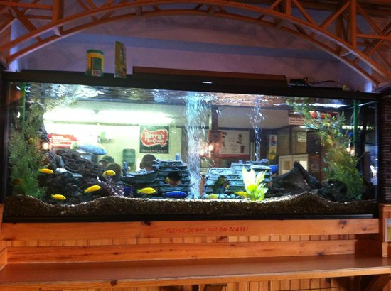 ‪‪Skaneateles‬, نيويورك: Beautiful aquarium at Doug's Fish Fry Skaneateles, NY‬