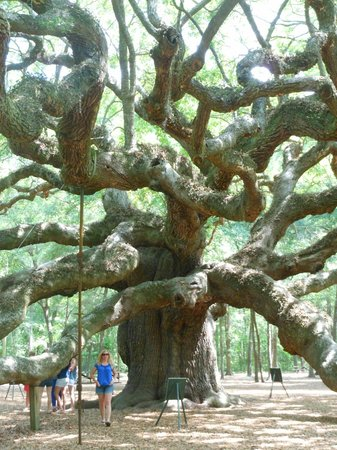 Johns Island, SC: Part of trunk