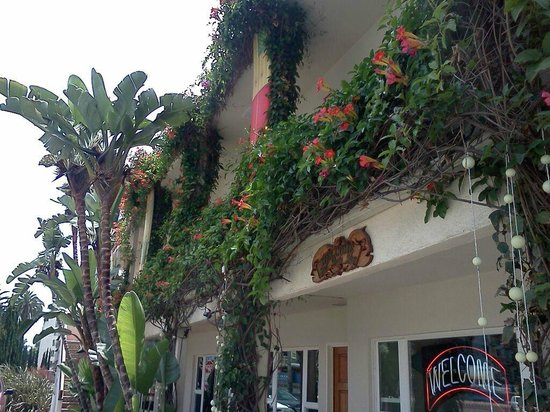 Hotel California: Trumpet Vines blooming in May 13'